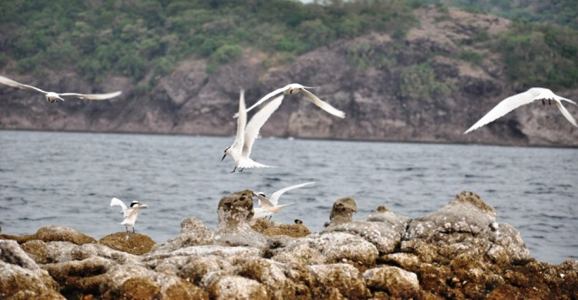 Marine birds of Santelmo Cove